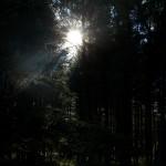 Mit Wald, ...